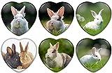 Kühlschrankmagnete Herz Kaninchen Hase Zwergkaninchen Porträt/Größe 5x5 cm/für Memoboard Pinnwand Magnettafel Whiteboard / 01